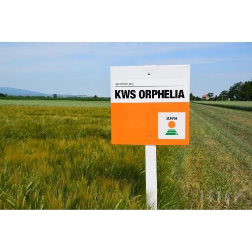 KWS Orphelia