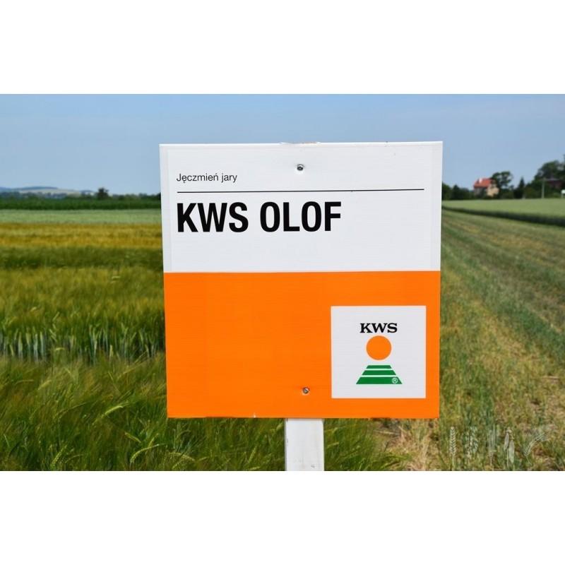 KWS Olof